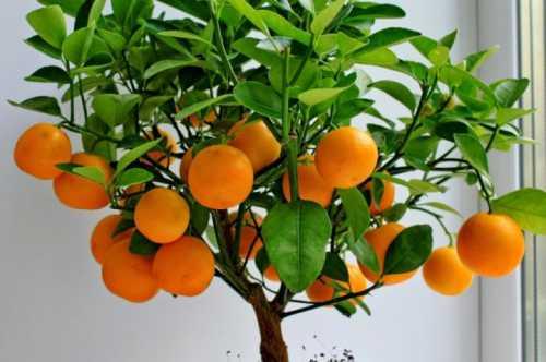 заводной апельсин стэнли кубрика: наглядное пособие по социологии
