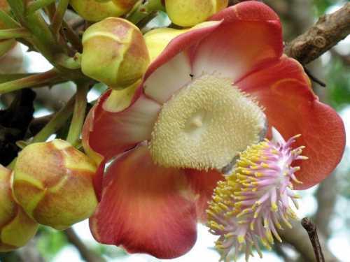 дерево бонсай: выращиваем любимые растения в миниатюре своими руками